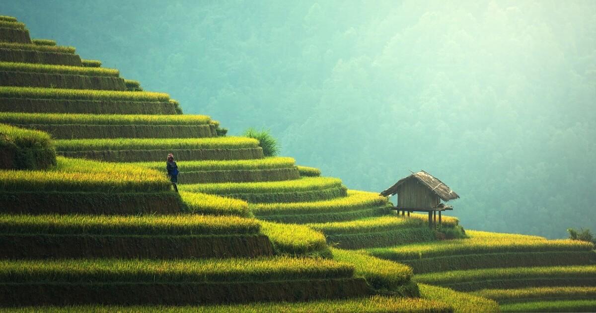 IIT na Bali Leance